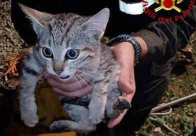 Vigili del fuoco recupero di un gattino e incidente stradale a falconara