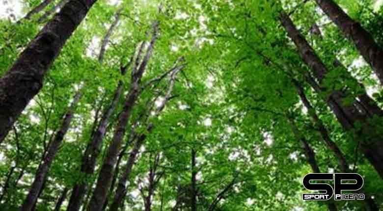 casini convegno foreste ascoli